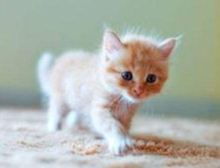 关于刚生的猫咪