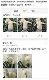 网友直播解剖活狗称为报复爱狗人士拦车