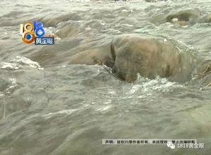 出事了萧山一家人去网红坝游玩,儿子不幸溺亡爸爸眼睁睁看着他沉下去