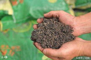 养花各种肥料用途