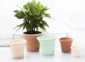 陶瓷花盆养花可以吗