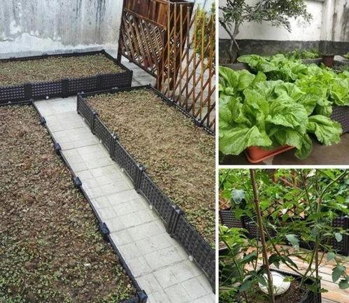 楼顶养花种菜的危害
