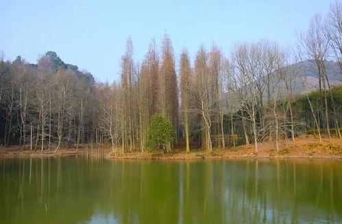 关于林场有关的诗词