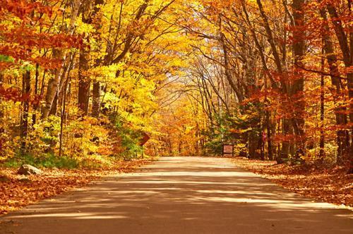 描写秋天景色的句子(描写秋天景色的句子)