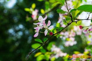 描写春天果树开花的句子_描写春天果树的句子 短句