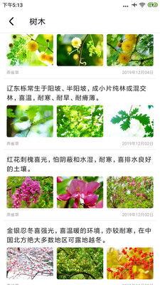 关于植物知识的资料