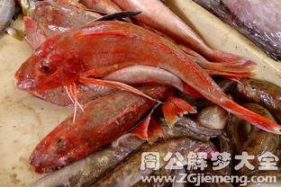 梦见很多鱼虾_梦见捡到很多鱼虾
