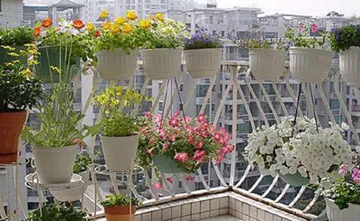 阳台养花没有露水怎么办