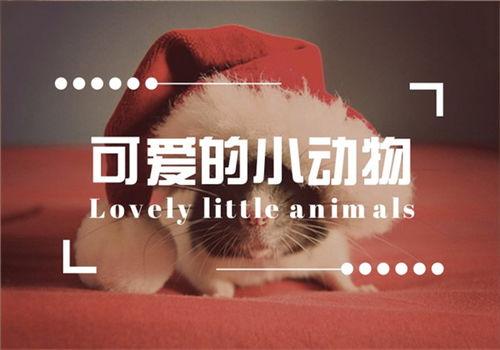 说说小动物作文评语
