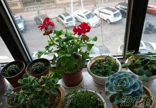 合肥适合家养花