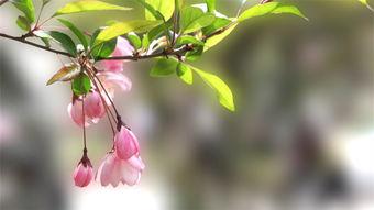春天季节特点_春天季节气候特点