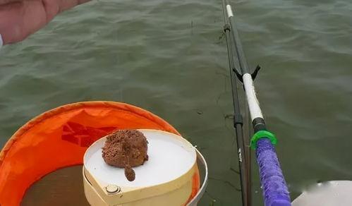 小鸡词料可以钓鱼吗