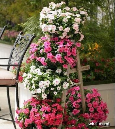 家里养花放在哪儿好