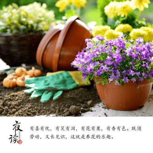 我把养花当作生活中的一种乐趣