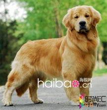 12星座最适合养的宠物狗狗