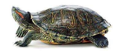 描寫烏龜捕食時候的詞語有哪些