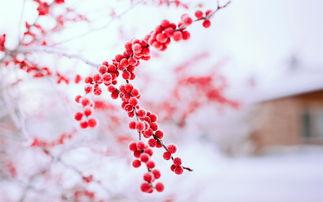 高中语文 有雪无诗俗了人 自古至今关于雪的诗句