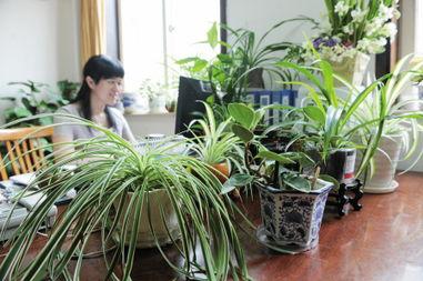 我在办公室怎么养花