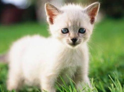 7个月的猫咪吃成猫粮还是幼猫粮