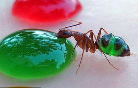 蚂蚁自备稿件背景