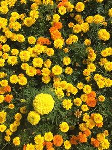 问什么老板让我养花