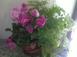 关于爱花养花的手抄报