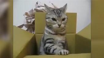 猫咪真的很可爱的汉化版