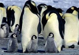 盘点动物界10种奇特交配 大熊猫看色情片调情