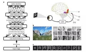 破解人类识别文字之谜,对图像中的字母进行无监督学习