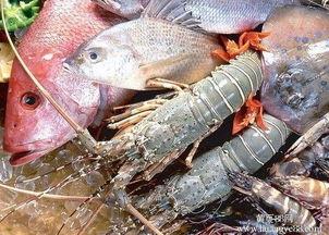 鲍庄·海鲜小火锅   人均:   青岛第一家以鲍鱼为主题的餐厅