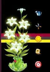 空间花藤以养花