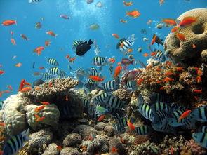 海底世界海底动物海底鱼海里图片高清图片