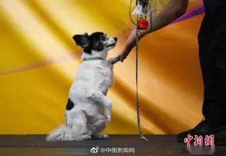 喜大普奔人大代表建议制定反虐待动物法