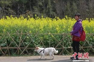 """太原、银川实施养犬新政——遛狗须牵绳、乘电梯避开使用高峰期11月1日起,新版《太原市养犬管理条例》将正式实施,这项被网友称为""""最严养狗令""""的法规中,对于养犬人的行为作出了多项限制。"""