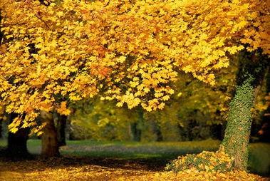描写时光与秋天的句子