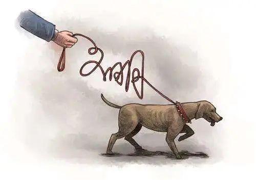 文明养犬,遛狗牵绳你做到了吗