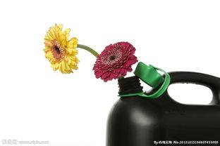 水壶怎么养花