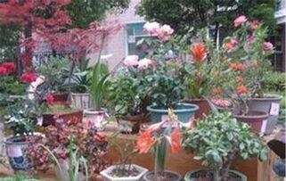 家里养花什么样的花盆最环保