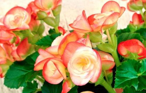 家庭室内养花的肥料