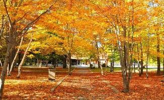 秋天的落叶作文优美开头