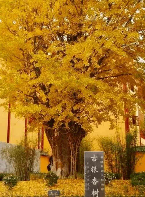 关于秋天乡下农村的诗句