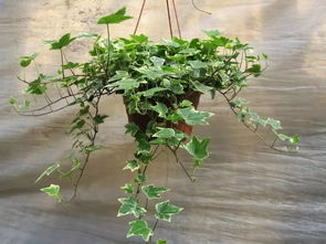 上海秋季家里的养花品种