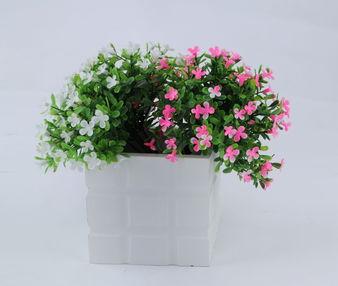 户内养花不见阳光的品种