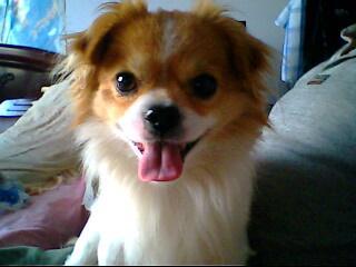 金毛幼犬求名字