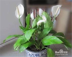 在家里怎么养花