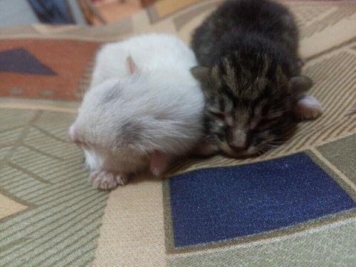 出生的猫咪怎么照顾