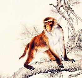 92属猴女5月偏财运