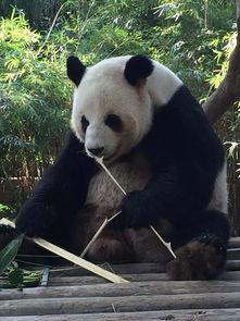 长隆野生动物园动物世界平日成人票长隆野生动物园野生动物园如果你想看完全部表演驴妈妈点评