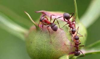 防腐剂养花