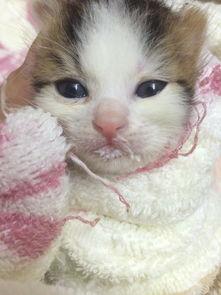 刚出生的小猫咪拉屎怎么处理